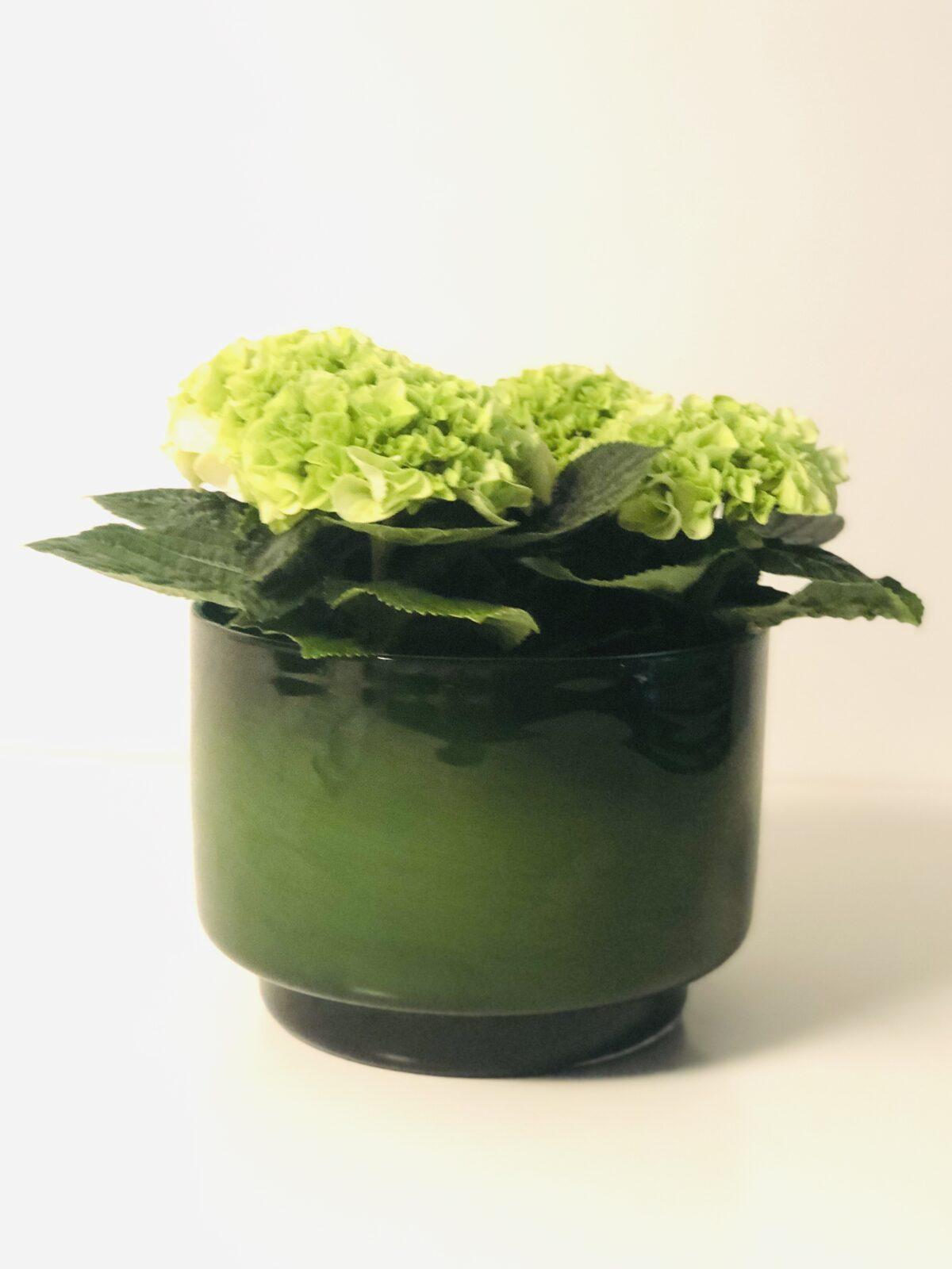 Bloemen & Planten Fleury De Bock21