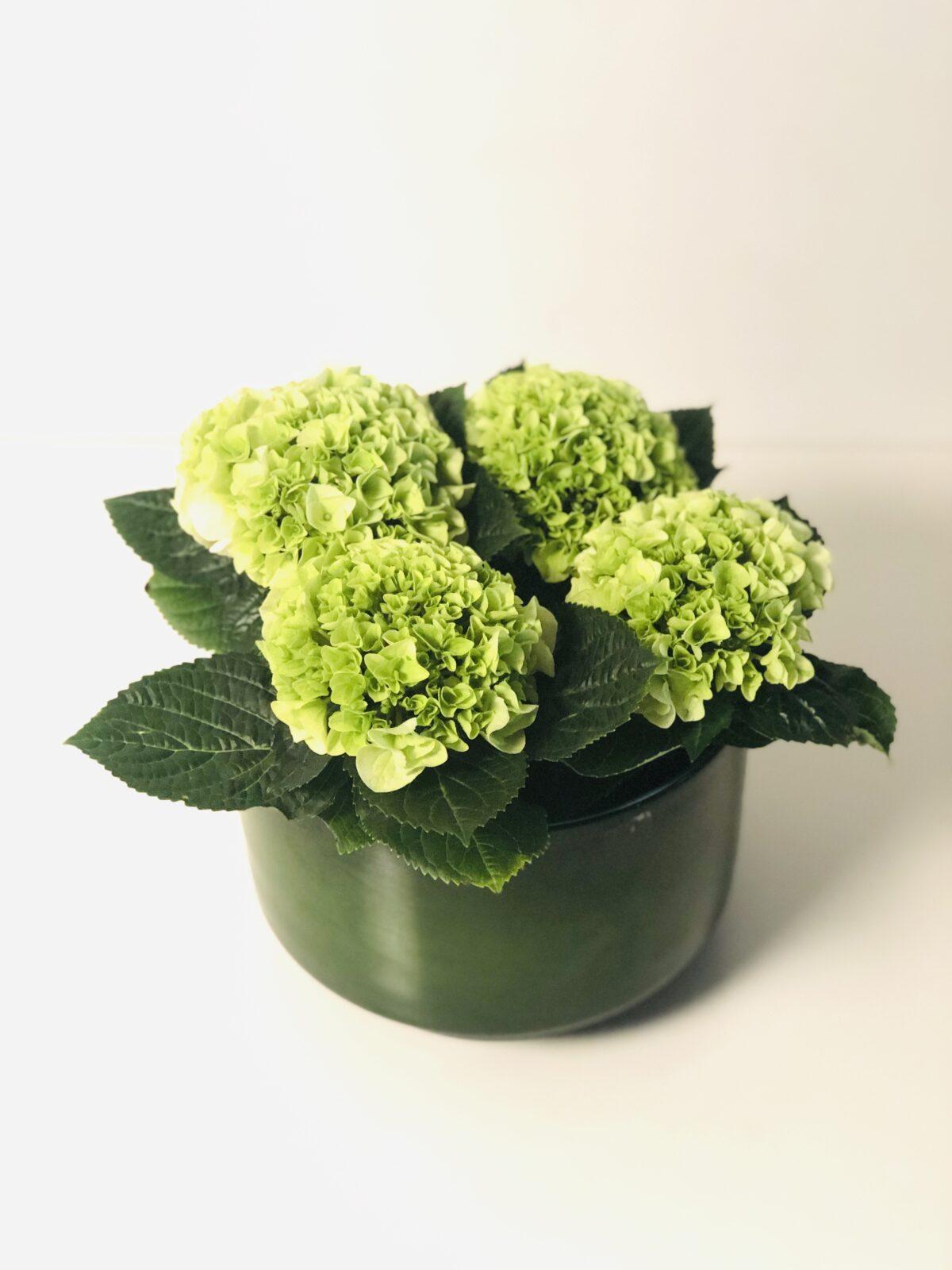 Bloemen & Planten Fleury De Bock22