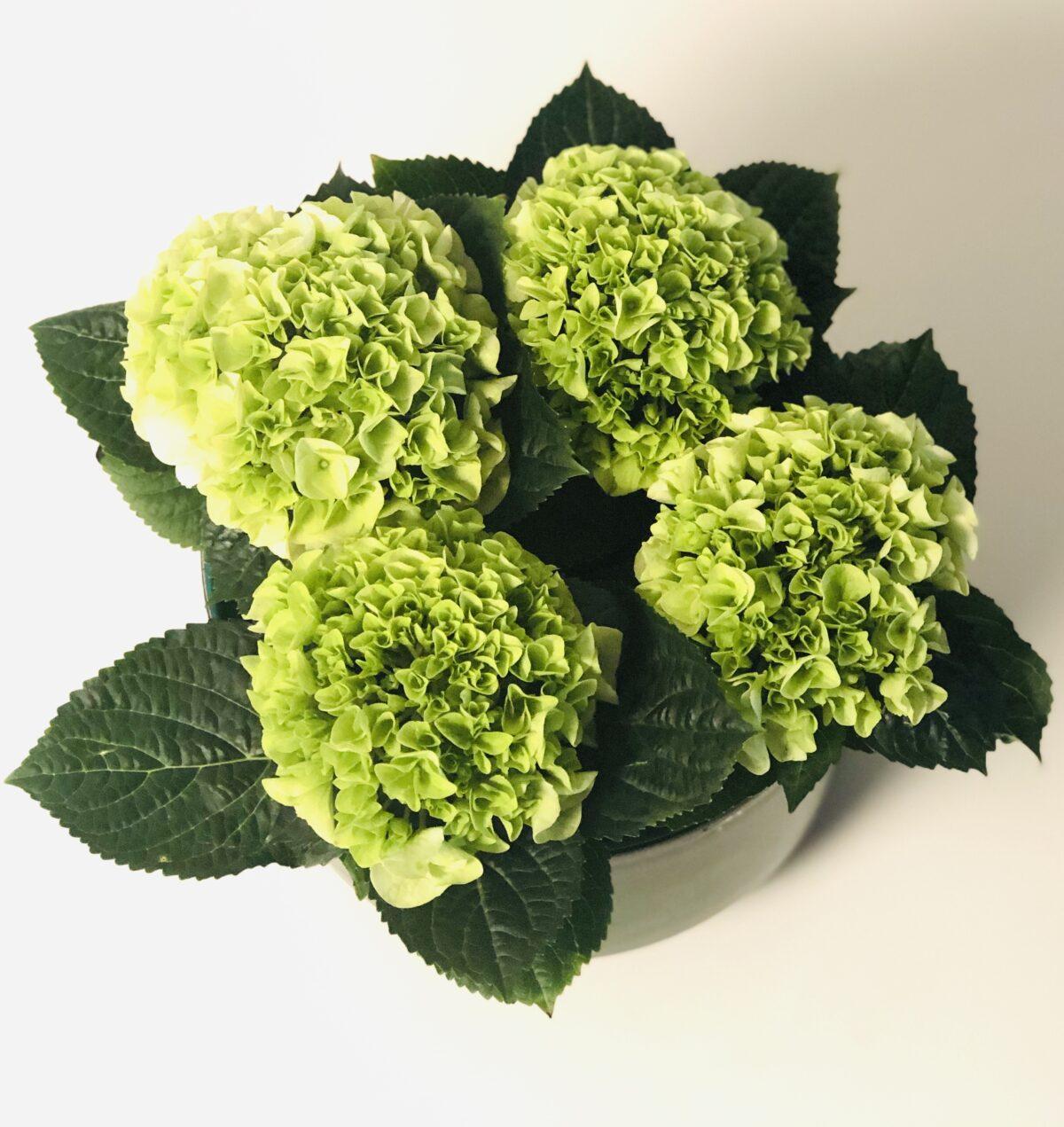 Bloemen & Planten Fleury De Bock23
